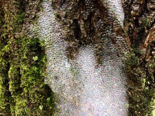 herkennen boomschuim