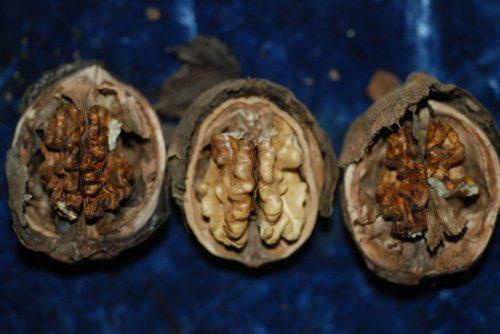 herkennen schimmels op walnoten